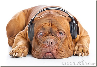 ein-hund-den-kopfhörern-hört-musik-18555522